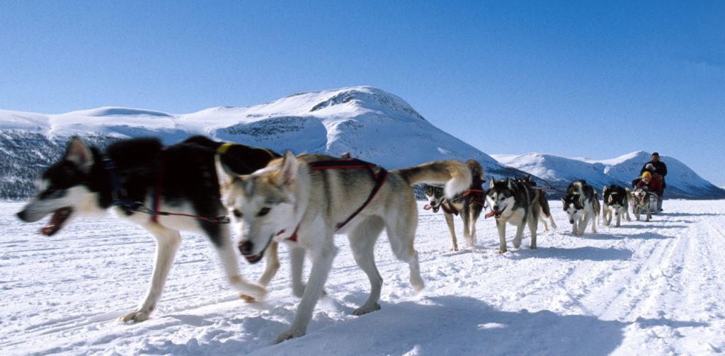 Hundspann i fjällvärlden. Foto: Patrick Trägårdh Outdoor Pictures In Lapland AB 0952-12233 070-6412233 www.opicla.com